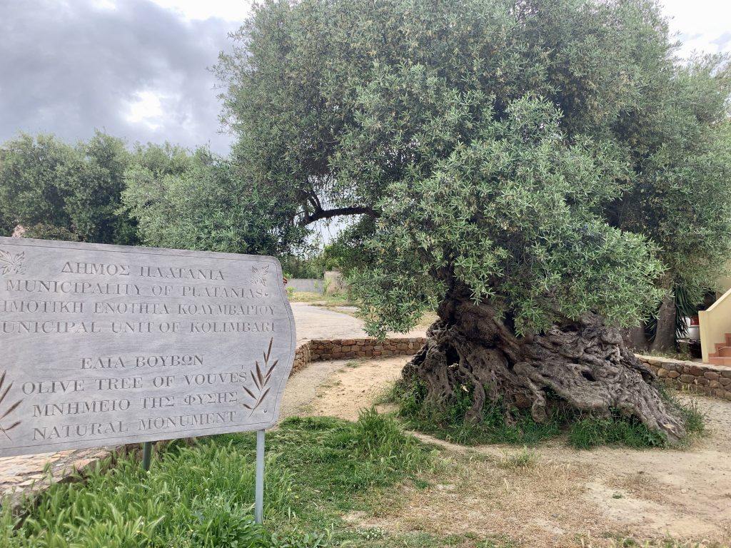 A sign commemorating the olive tree of vouves next to the 3,000 year old tree
